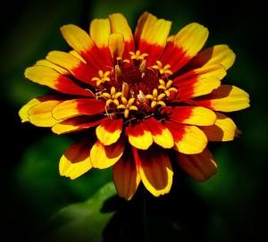 flower-404355_640